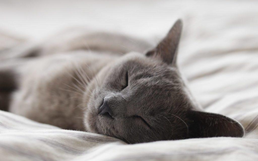 cat's snore